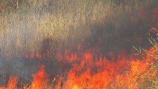 Пожар! Утиное болото