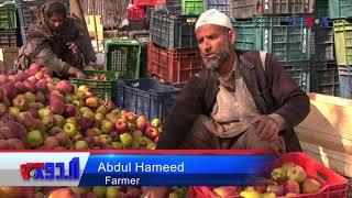 سرینگر: بن موسم برف باری سے سیب کی فصل کو نقصان