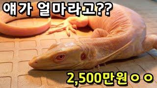 대만에 파충류 사러 가면 생기는 일... 한국인이라고 …