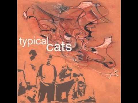 Typical Cats - Cliche
