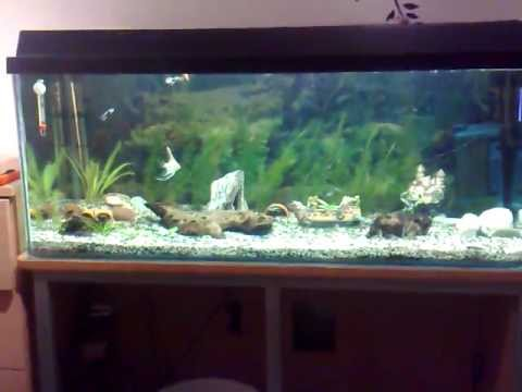 mein aktuelles 160 liter juwel aquarium youtube. Black Bedroom Furniture Sets. Home Design Ideas