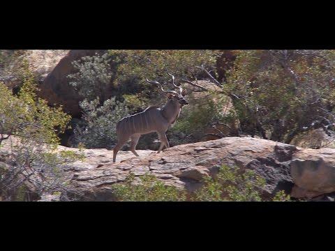 Erongo Mountain Rhino Sanctuary Trust & Erongo Verzeichnis Film