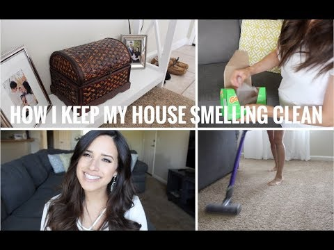 how to keep your house smelling clean with dogs youtube. Black Bedroom Furniture Sets. Home Design Ideas