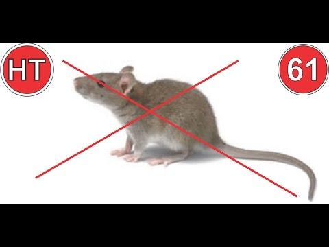 7 mẹo đuổi chuột không cần nuôi mèo, đánh bả | mẹo vặt cuộc sống