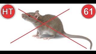 7 mẹo đuổi chuột không cần nuôi mèo, đánh bả   mẹo vặt cuộc sống