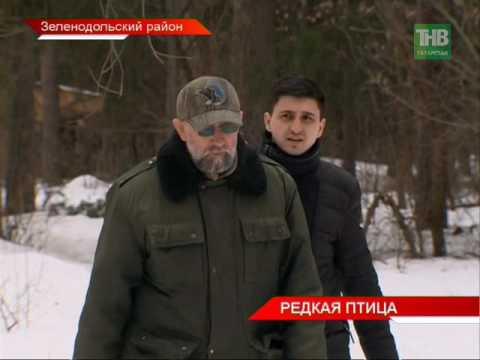Орланы-белохвосты поменяли свой статус в Красной Книге Татарстана