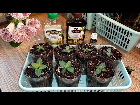 Вопрос: Какое растение будет расти в комнате, если никакие не растут?