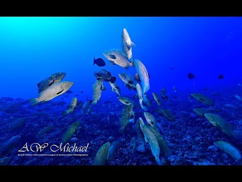 Ocean Geographic Groupers & Sharks Fakarava Expedition 2018