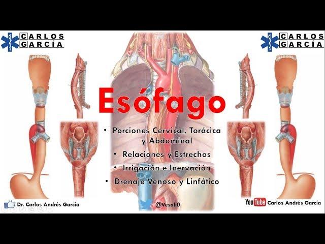 Carlos andres garcia anatomia-esofago part. i porcion cervical ...