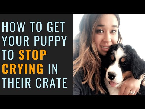 Puppy Won't Stop Crying In Crate (crate Training A Puppy)
