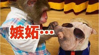 """最近じわじわ売れている「本田けいす犬」こと""""もやちゃん""""に、カイくん..."""