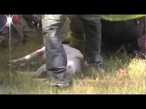 Pit Bulls life gets saved from fire!