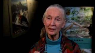 the year of science features jane goodall