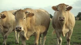 Elevage alternatif : ces éleveurs qui nous font un effet boeuf !
