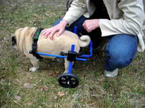 Wheelchair Dog Folding Chair Ottoman A Can Be Life Changer For Your Older Youtube