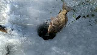 Рыбалка сетями ловим карасей крупный карась по льду рыбалка 2020