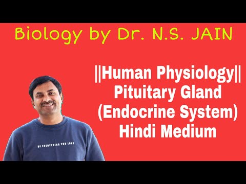Pituitary Gland (Endocrine System) Class 11th Hindi Medium