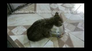 mum cat hit by car left 3 kittens ...very sad cat story(R.I,P)