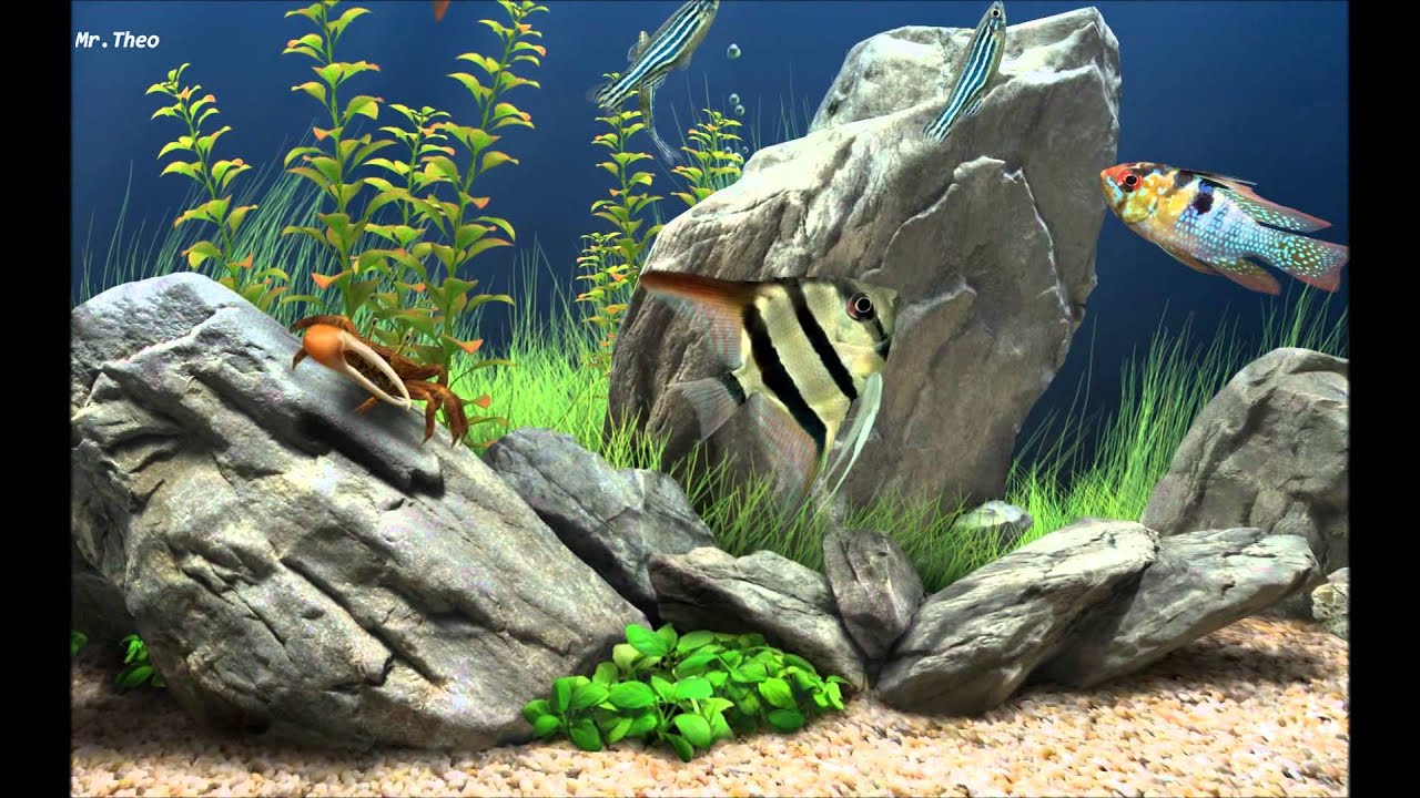 3d Fish Aquarium Live Wallpaper For Pc Dream Aquarium Screensaver Hd Youtube