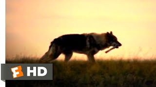 Alpha (2018) - First Game of Fetch Scene (5/10) | Movieclips