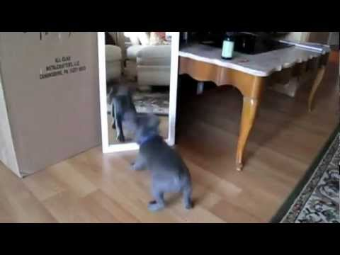 חתולים וכלבים מגלים את המראה