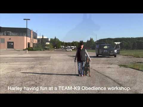 team-k9 videos TEAM-K9 Videos 0