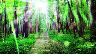 RELAXING MUSIC FOR STRESS RELIEF l RELAXATION MUSIC FOR STRESS RELIEF & HEALING l ANTI ANXIETY MUSIC