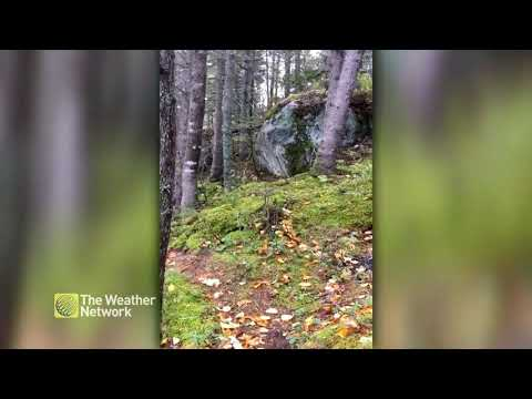 """Intense winds cause Quebec forest to """"breathe"""""""