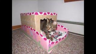 tutorial manualidad como hacer una casa /cama para mascota(gato)