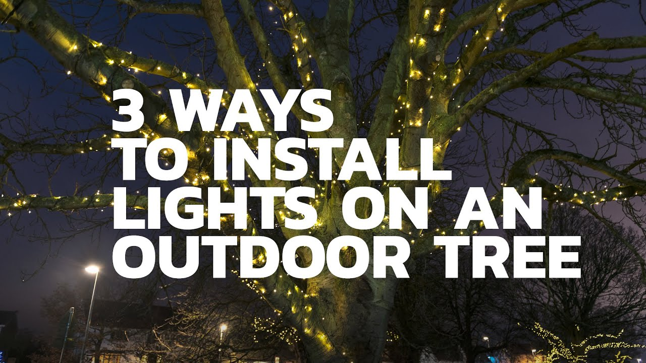 Install Lights On An Outdoor Tree
