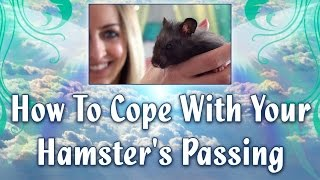 How To Cope With Your Hamster's Passing Thumbnail