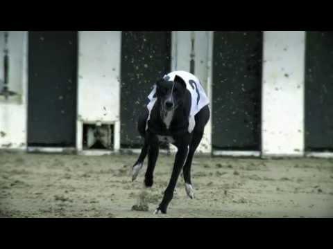 Greyhound Racing Truth