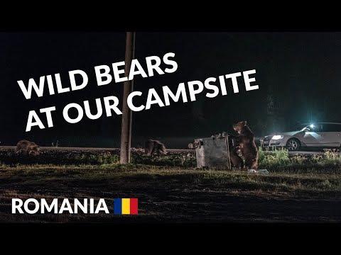 Bear watching in Romania   Carpathian Mountains Transylvania   Romania travel vlog