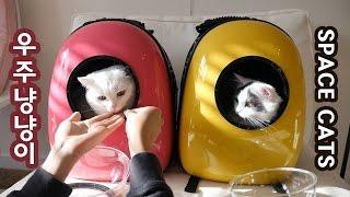 우주 고양이 - 유펫 우주선 가방 SPACE CATS - U-PET SPACESHIP CARRIER