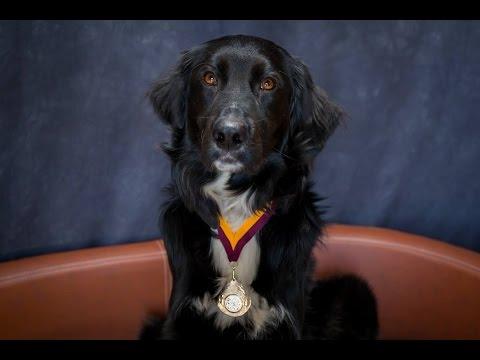 Jet - Collie Cross - 3 Weeks Residential Dog Training