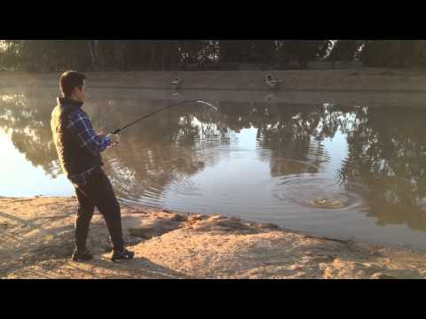 Fishing for Yellow Belly or Silver Perch in a farm dam