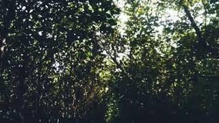 Last child ' Pedih & Lirik lagu ( New - Vidio Clip Cover )