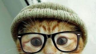 Смешные коты. Подборка #2