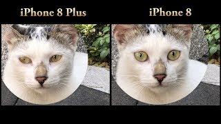 iPhone 8 vs iPhone 8 Plus Camera Test (Best Smartphone Camera)