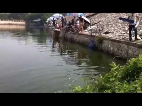 Fishing - Touch Fishing Type - Câu Lục ao Vả - Kéo như điên