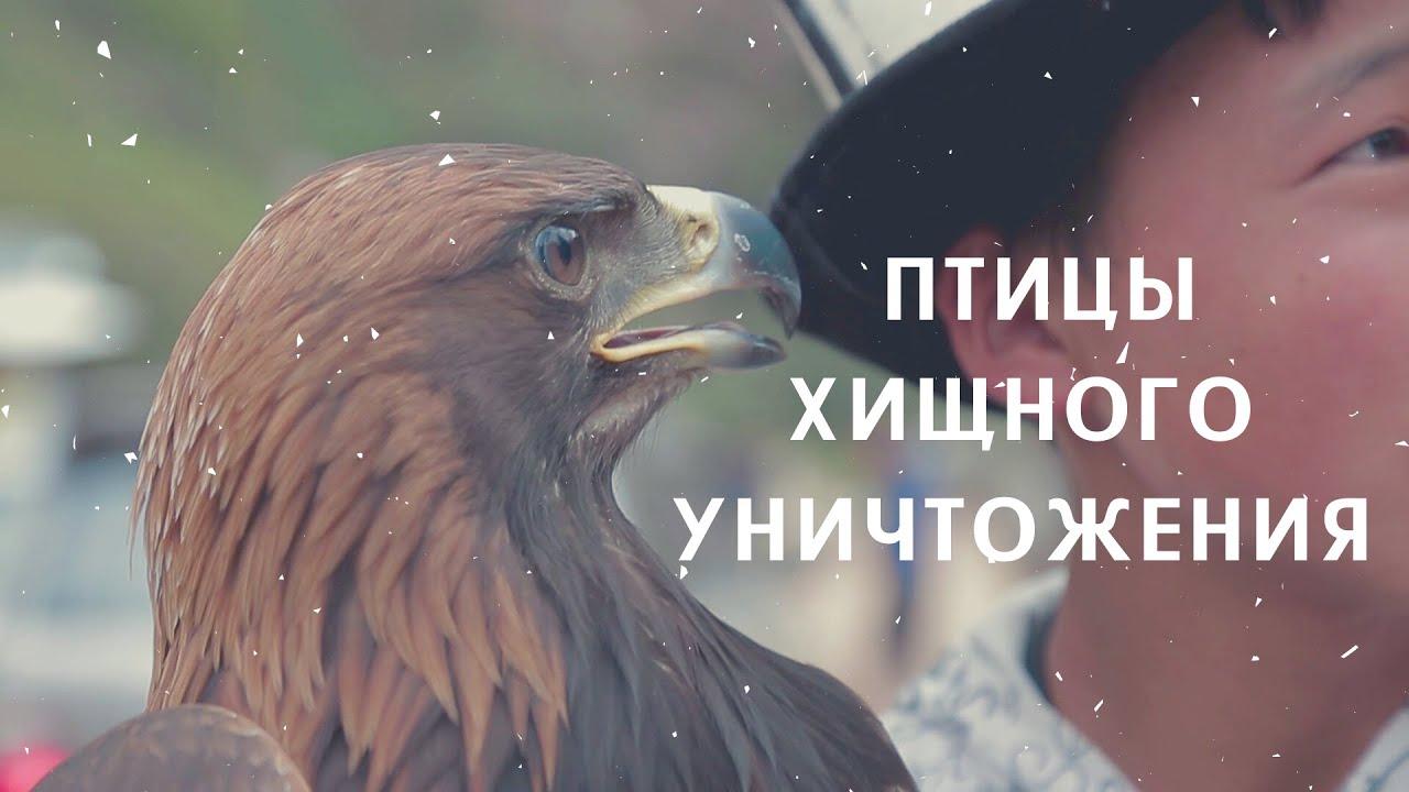 Что угрожает редким птицам в Кыргызстане?
