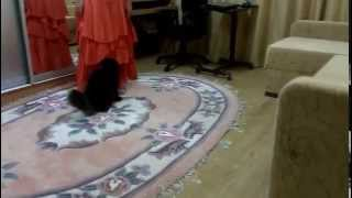 кот Богдан, который запрыгивает на руки под песни Кузьмина, даже если этого и не хочет