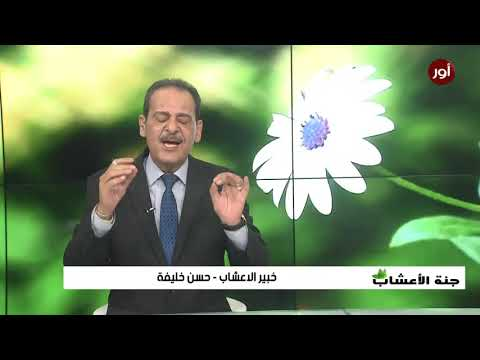 أهم فوائد الريحان مع خبير الاعشاب حسن خليفة - جنة الاعشاب