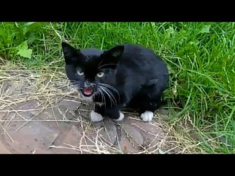 Stray Kitten Hisses on a Metal Hatch