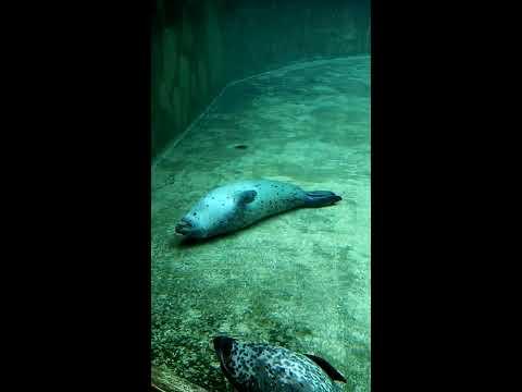 Funny sleeping seal under water