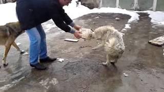 video собака в банке