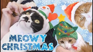 Dressing our cats up for Christmas