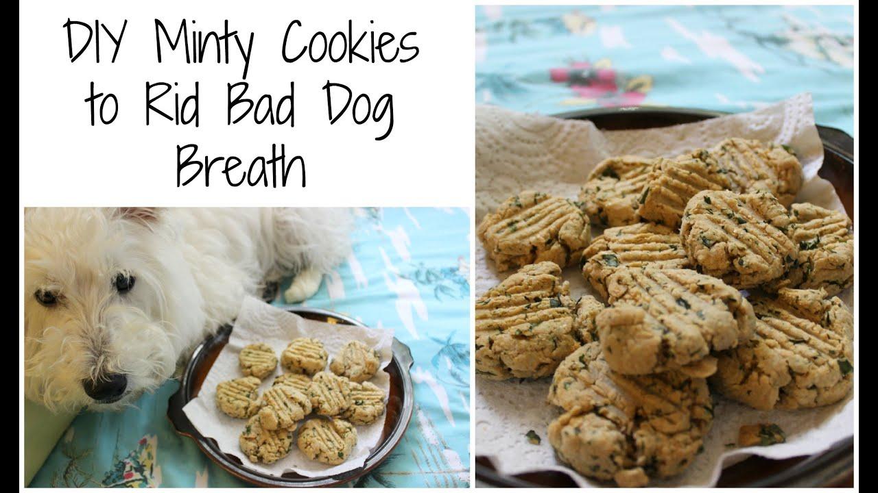 DIY Dog Breath Mints | TheDogBlog