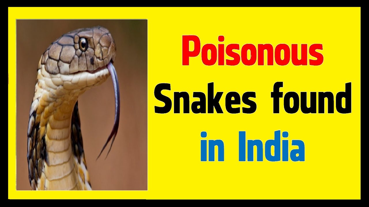 how to get cyanide poison in india