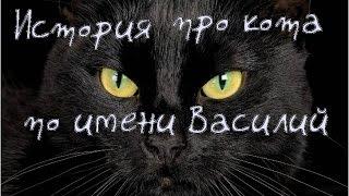 История кота по имени Василий